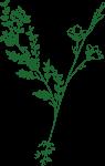 motif fleur vert